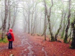 hiking Alsace region