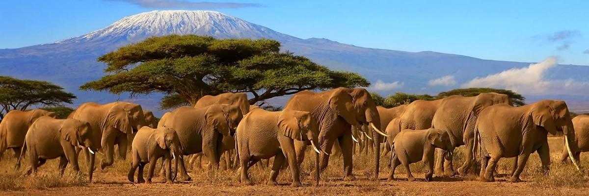 6 Days 5 Days- Masai Mara, Lake Nakuru & Amboseli