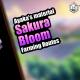 Sakura Bloom Farming Routes