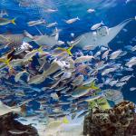 土日は大混雑!サンシャイン水族館の空いている時間をご紹介!