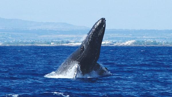 出典:http://www.hawaiist.net/wp-content/uploads/2014/02/t_whalewatching_main.jpg