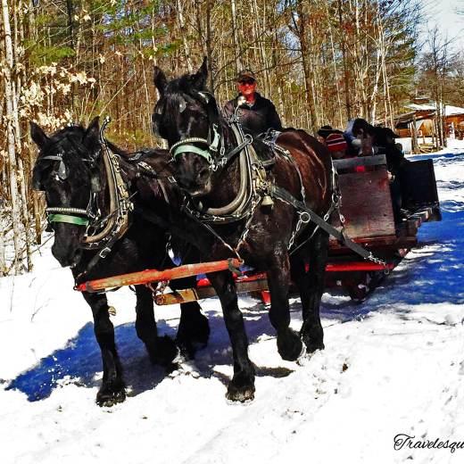 Fulton's-Horse-drawn-wagon-