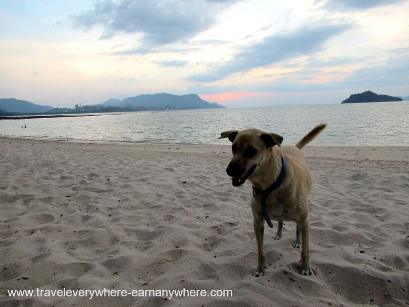 Dog on beach in Langkawi