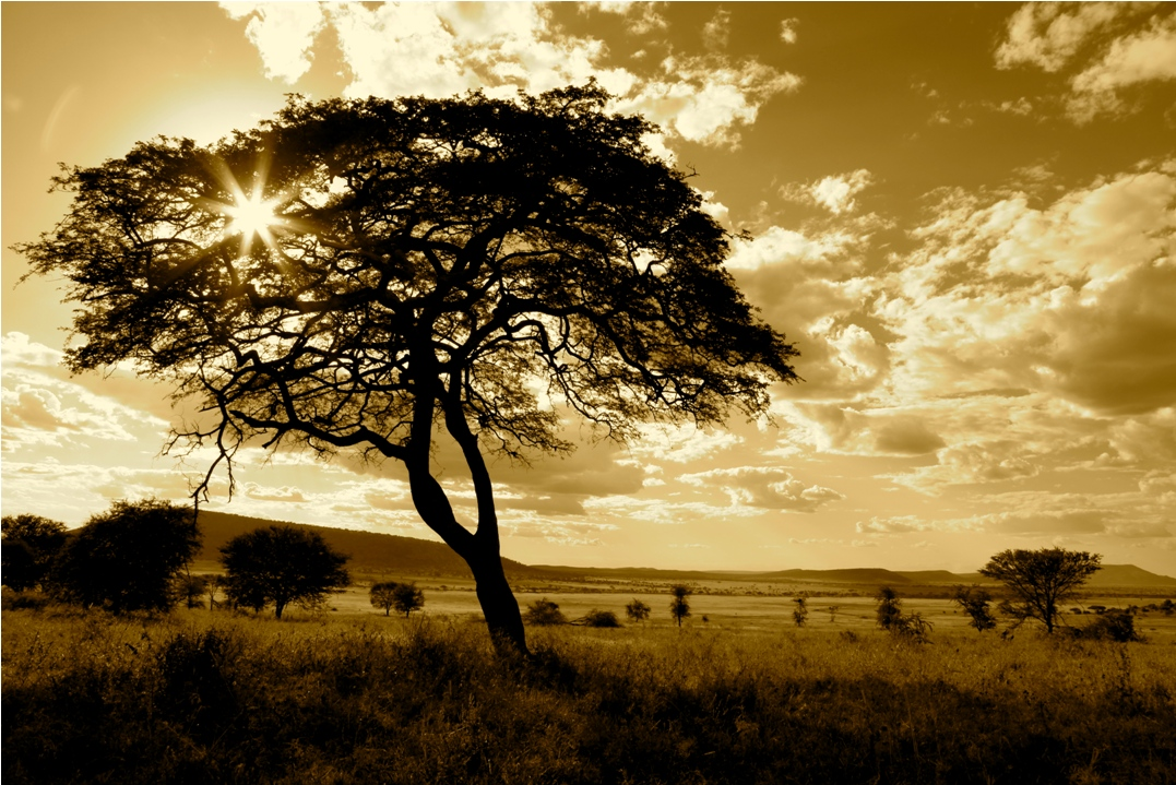 Photo credit www.thesafaricollection.com