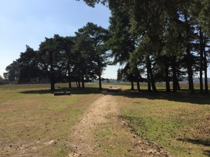 Shatterford walk, New Forest