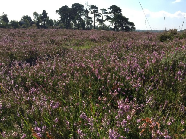 Shatterford, New Forest