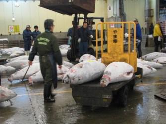 Tsukiji market 033