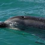 Dolphin Bay in Atlantis The Palm, Dubai