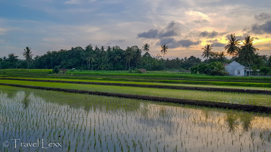 Sun setting over rice fields - 25 reasons you should never travel to Indonesia