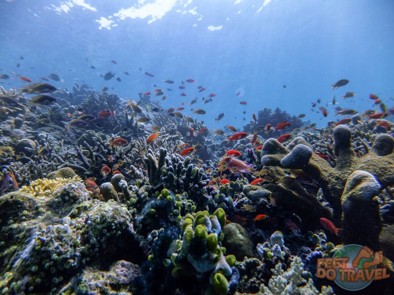 Fish and coral during a scuba dive