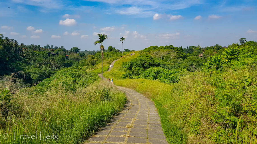 A winding path through greenery