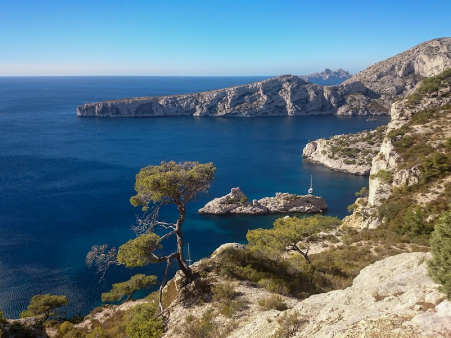 Trees growing out of cliffs along one of Marseille's best urban hikes - Calanque de Sugiton