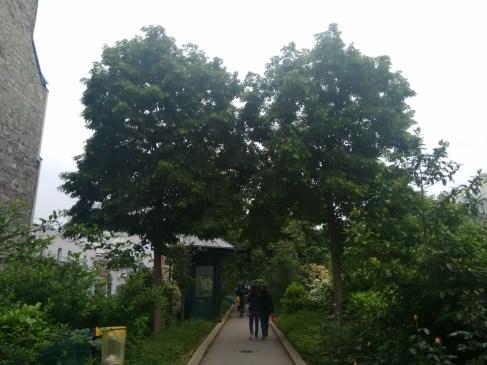 Tree tunnel :)