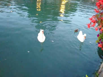 More birds in the canal.