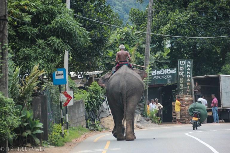 Top 6 experiences in Sri Lanka: elephant