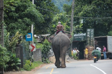 Top 6 experiences in Sri Lanka: elephant