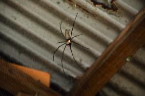 Shower spider