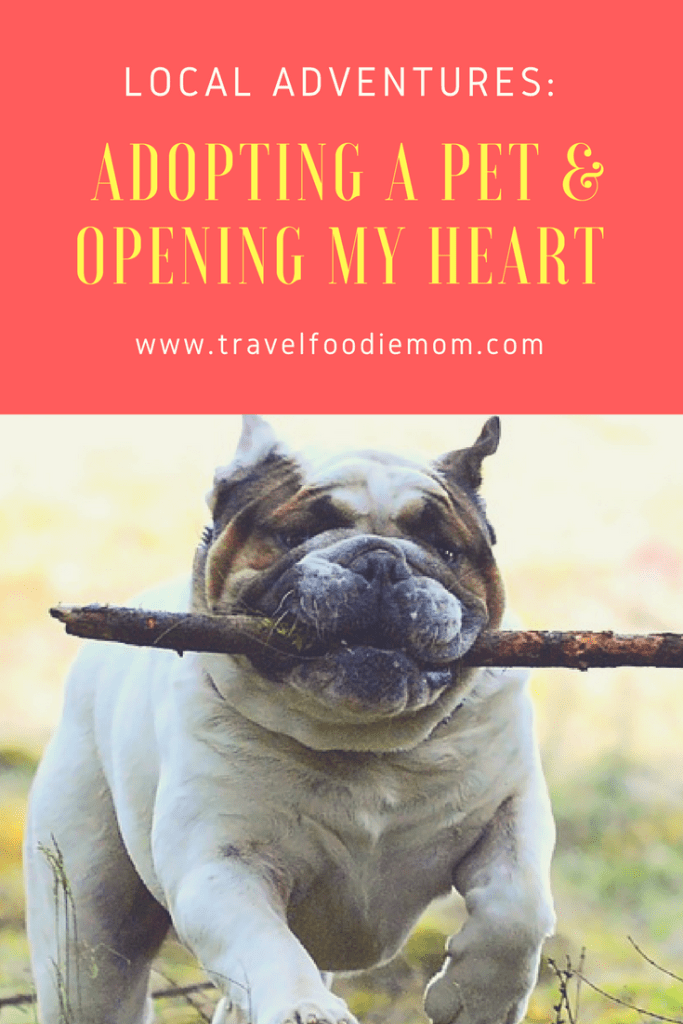 Local Adventures: Adopting A Pet & Opening My Heart