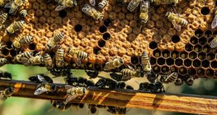 Uses of Beeswax Around the World