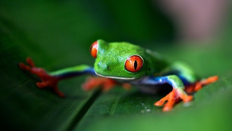 best things to do in costa rica
