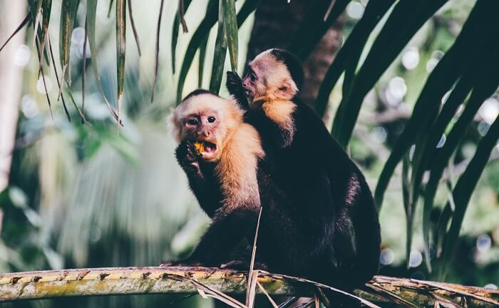 things to see in costa rica