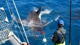 Cage diving australia