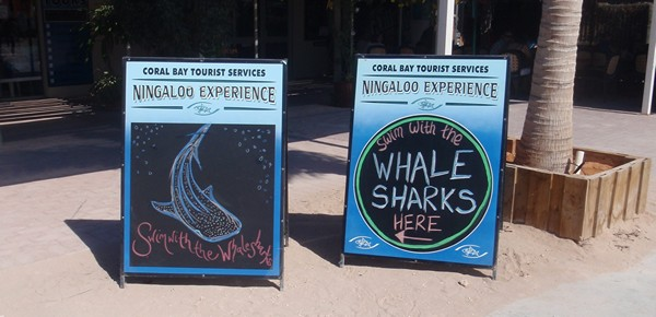 Swim with Whale Sharks in Western Australia
