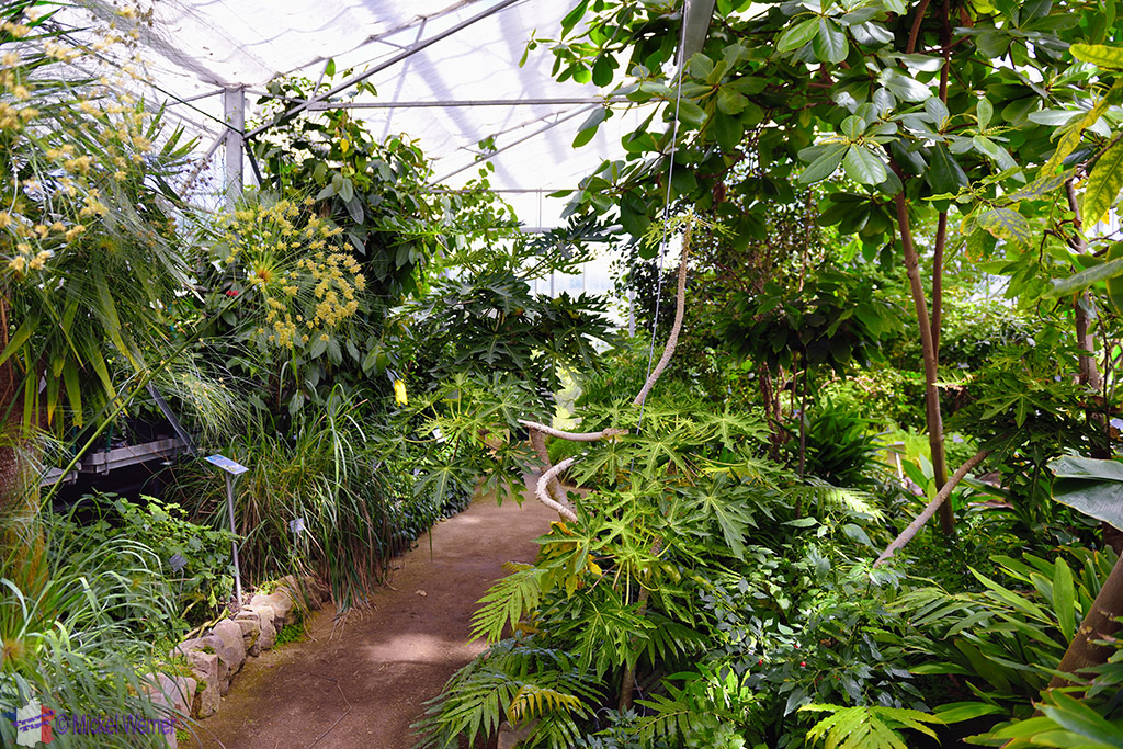 Amazon rainforest of Jardins Suspendu of Le Havre