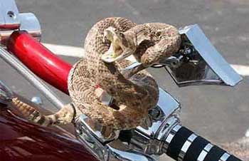 Motorcycle theft prevention