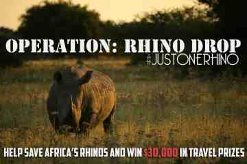 Operation Rhino Drop: Help Save Africa's Rhinos