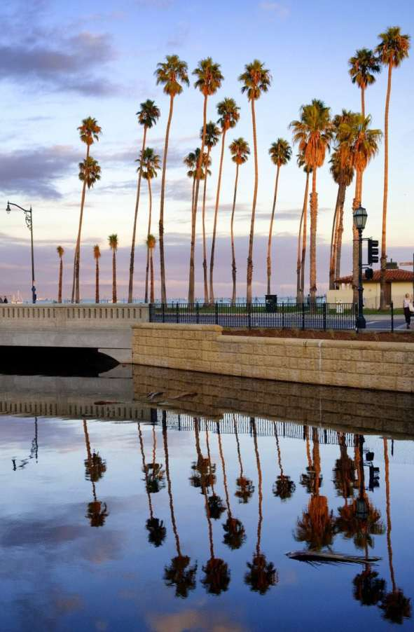 Reflections of palm trees in downtown Santa Barbara
