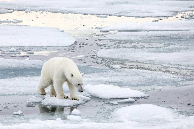 Go on a polar bear safari for a real winter adventure this summer.