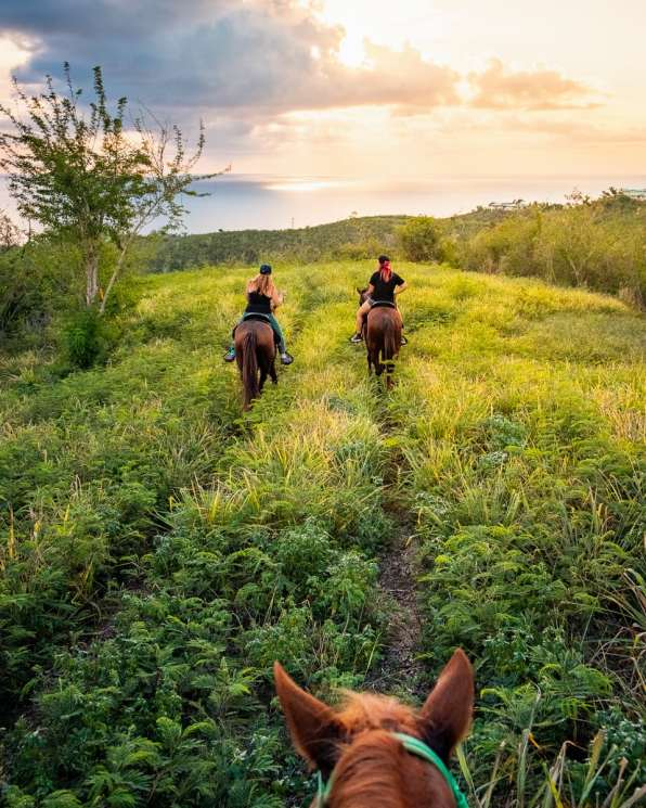 Riding through the grassy fields of St. Croix