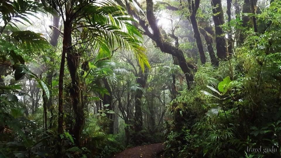 Costa Rica, Monteverde: di vegetazione e nebbia