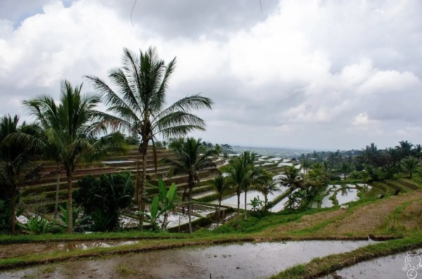 Risaie di Jatiluwih - Itinerario a Bali