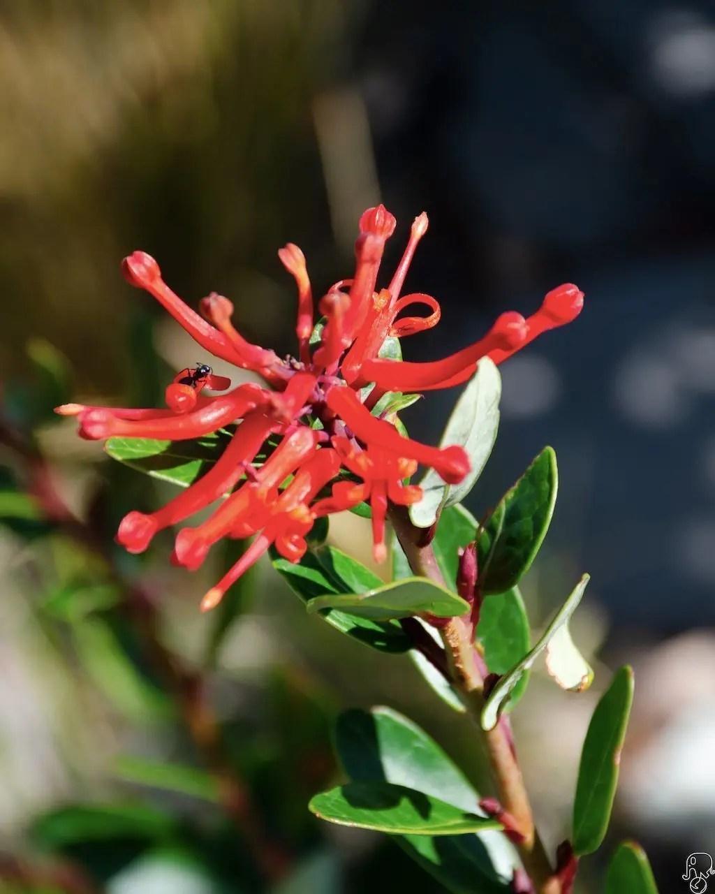 fiori patagonia