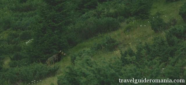 Fauna of Apuseni Nature Park - bear