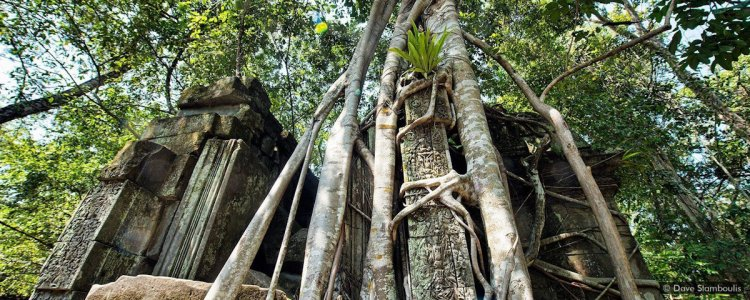 Travel guide to Angkor Wat temples - Beng Mealea temple