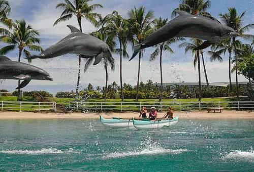 Dolphin Quest At Hilton Waikoloa Village