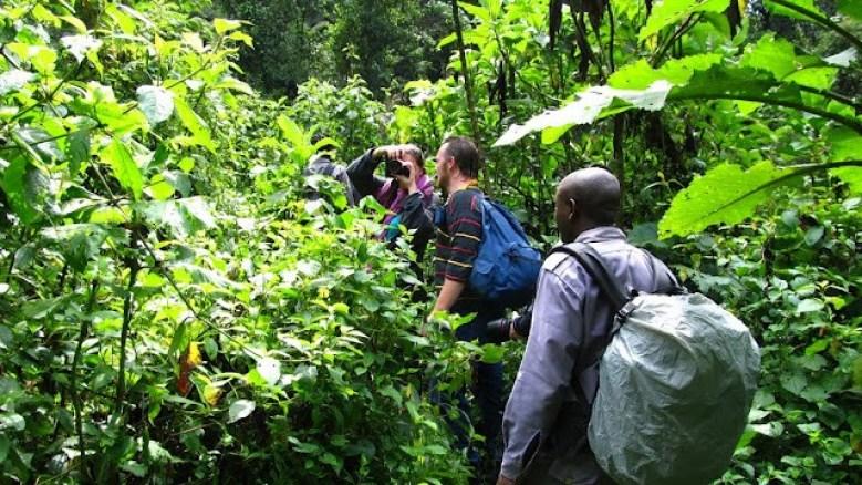 Uganda gorilla trekking safari experience