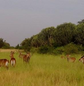 Bokora Corridor Wildlife Reserve Uganda