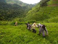 What is the Best Time for a Uganda Gorilla Trekking Safari? – Uganda Safari News