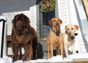 The Burgone Dogs