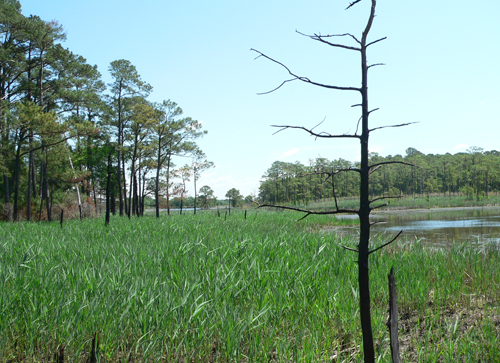 Transquaking River - Dorchester County