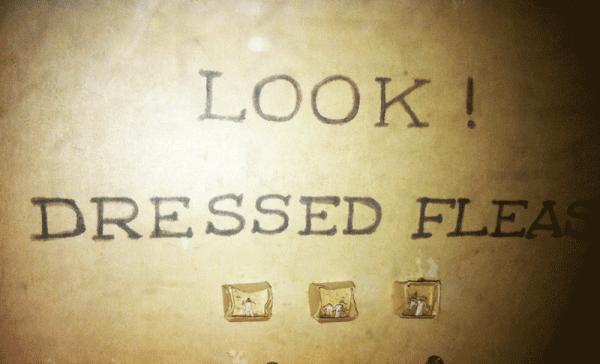 Dressed Fleas