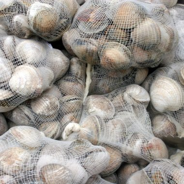Steamed Clams at the Crisfield Clambake
