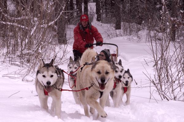 photo Courtesy of Husky Power Dog Sledding