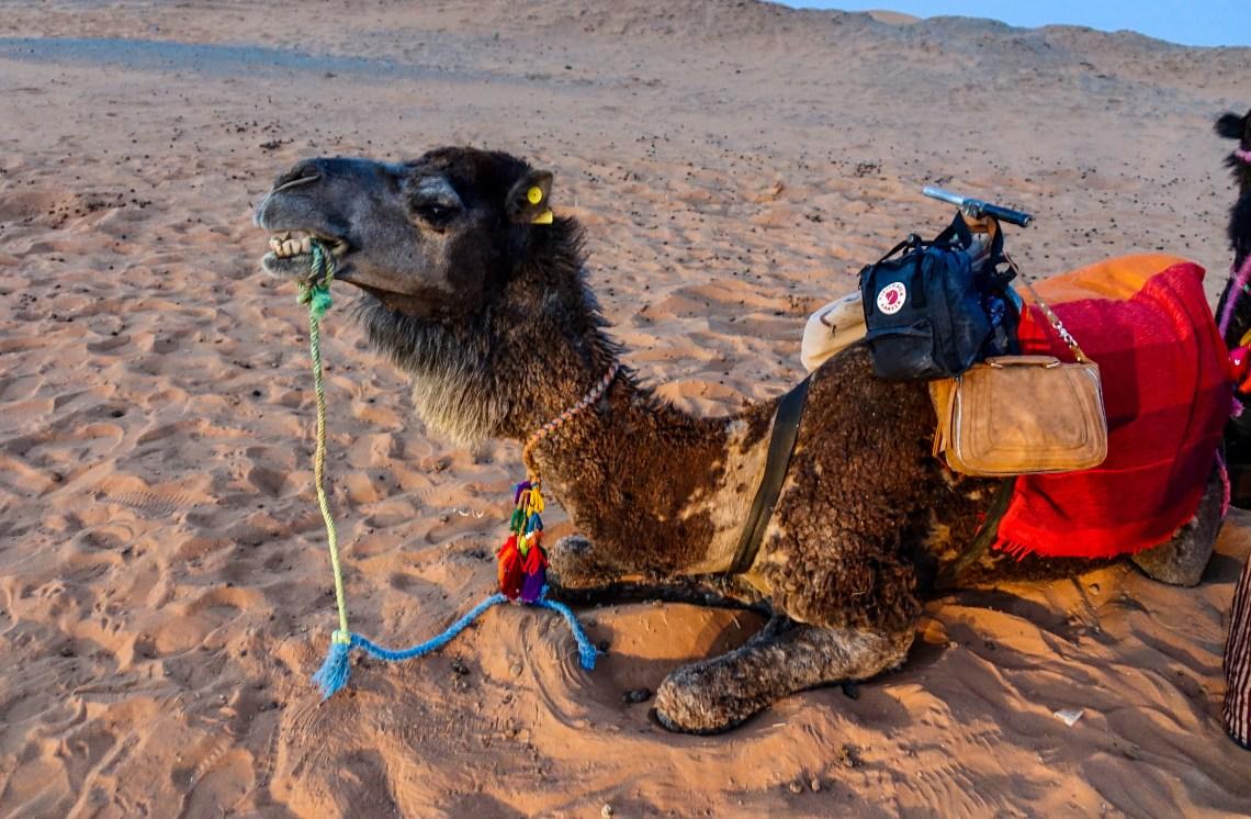 Sahara Desert, Morocco, Merzouga, Camels, Desert Camping, Glamping, Drum Circles