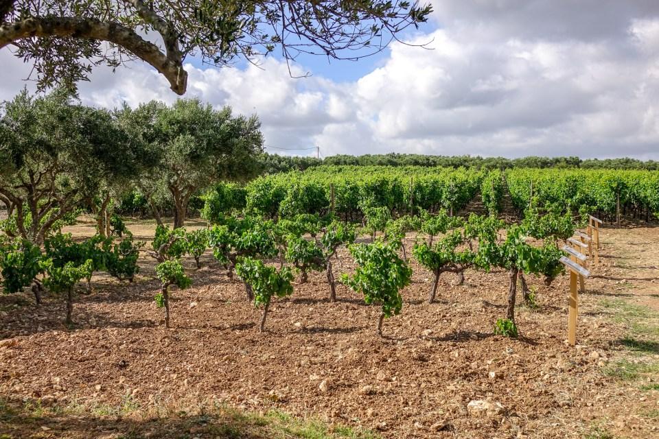 Winery on Crete, Lyrarakis, Greek wine