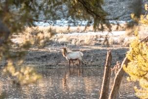 2018_0420_Yellowstone_Day31885